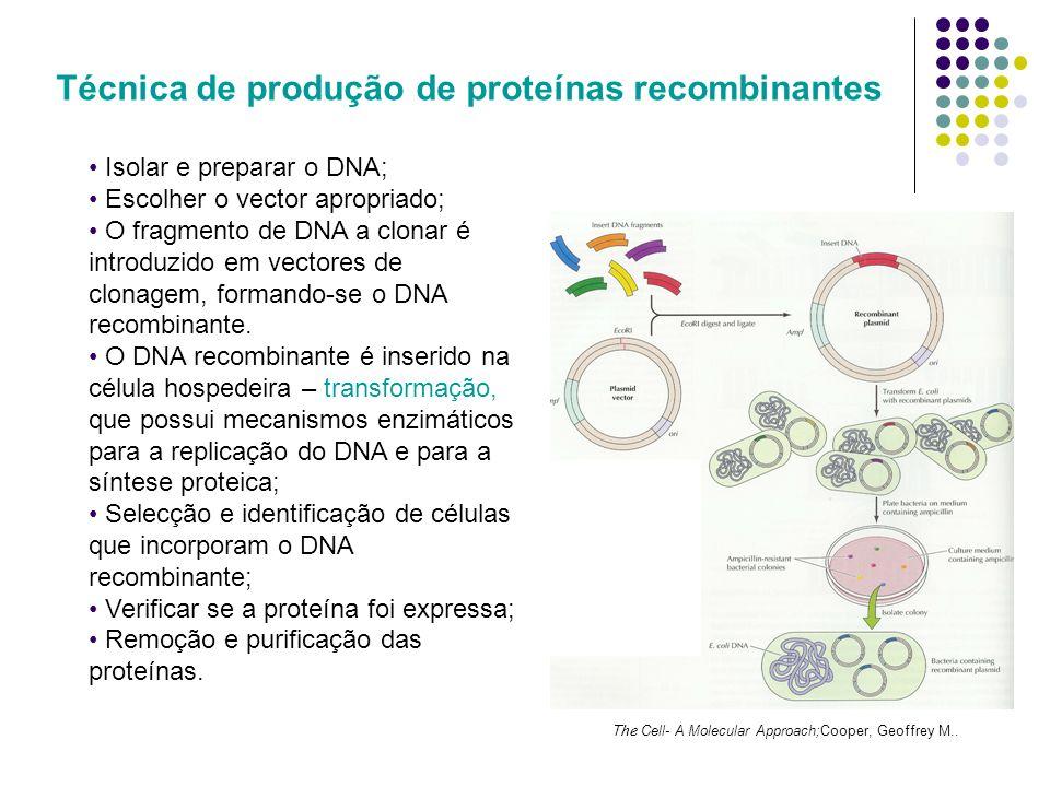 Algumas enzimas envolvidas no processo EnzimasFunção Tipo II (endonuclease de restrição)Cortam os DNAs em sequências de bases específicas.