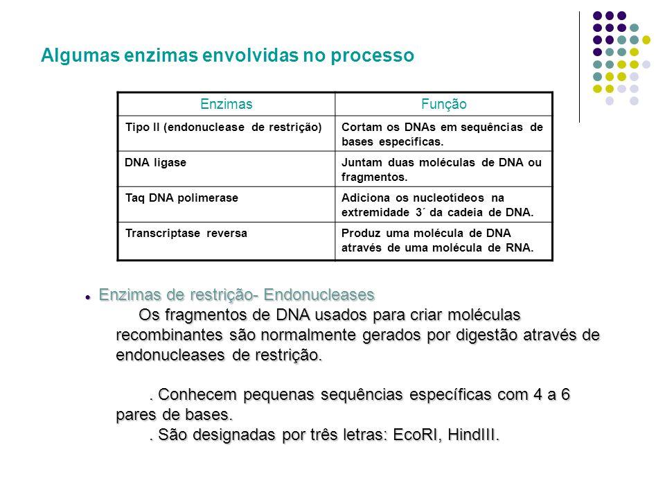 Vectores de clonagem Capaz de transportar uma sequência de DNA estranha dando origem a um DNA híbrido ou recombinante.