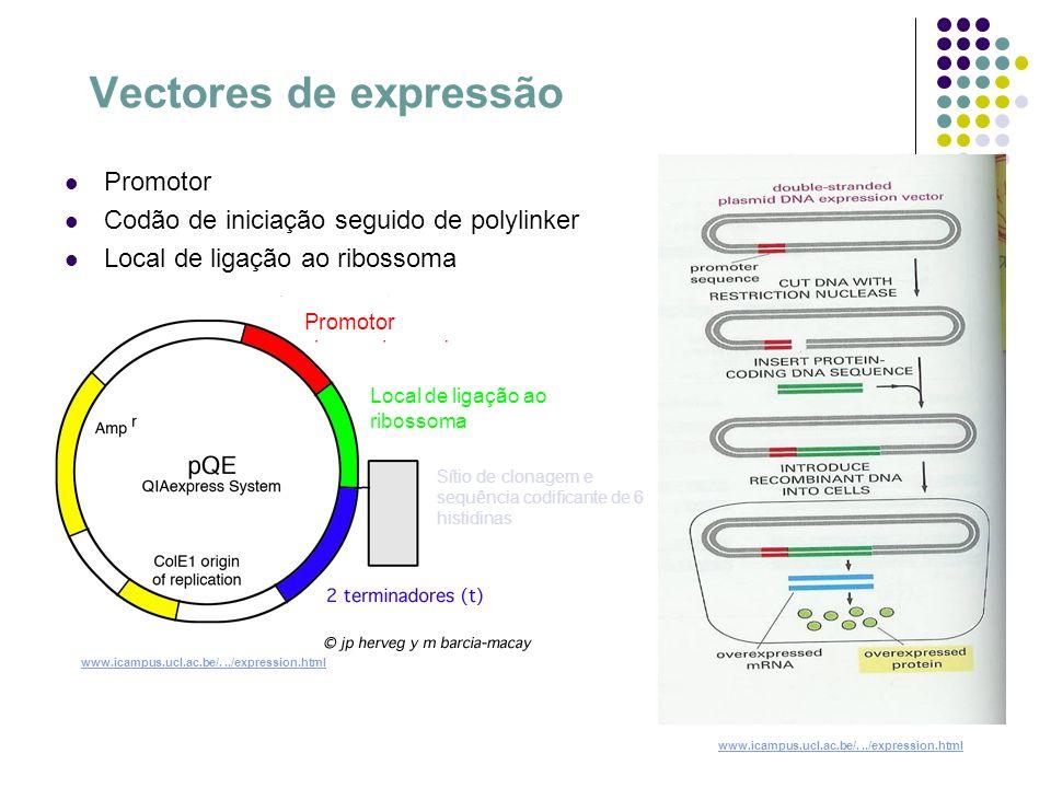 Transformação Ocorre quando uma célula incorpora e exprime um fragmento de material genético.