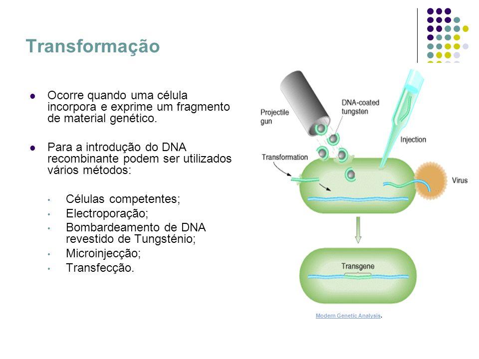 Extracção e purificação de proteínas Extracção lise celular Purificação Cromatografia de afinidade Lehningher Principles of Biochemistry