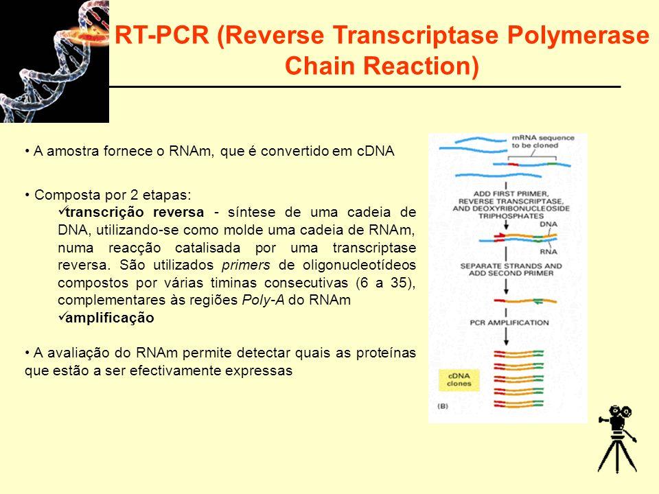 RT-PCR (Reverse Transcriptase Polymerase Chain Reaction) A amostra fornece o RNAm, que é convertido em cDNA Composta por 2 etapas: transcrição reversa - síntese de uma cadeia de DNA, utilizando-se como molde uma cadeia de RNAm, numa reacção catalisada por uma transcriptase reversa.