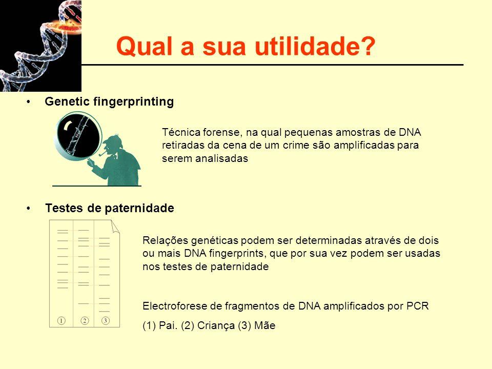 Qual a sua utilidade? Genetic fingerprinting Testes de paternidade Relações genéticas podem ser determinadas através de dois ou mais DNA fingerprints,