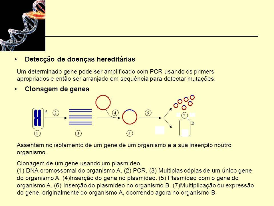 Detecção de doenças hereditárias Clonagem de genes Assentam no isolamento de um gene de um organismo e a sua inserção noutro organismo.