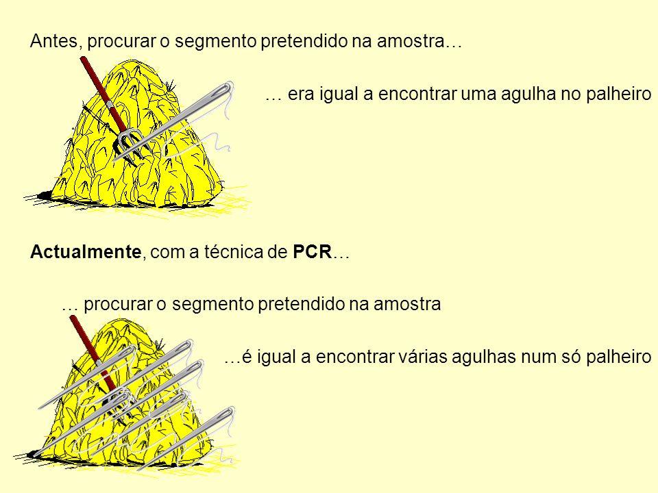 Antes, procurar o segmento pretendido na amostra… … era igual a encontrar uma agulha no palheiro Actualmente, com a técnica de PCR… … procurar o segmento pretendido na amostra …é igual a encontrar várias agulhas num só palheiro
