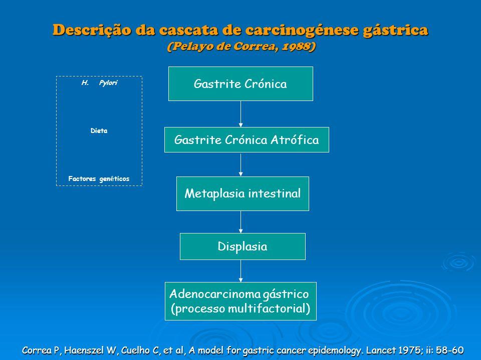 Descrição da cascata de carcinogénese gástrica (Pelayo de Correa, 1988) Gastrite Crónica Gastrite Crónica Atrófica Metaplasia intestinal Displasia Ade