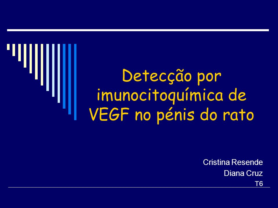 Objectivo Mapear a localização preferencial do VEGF (vascular endothelial growth factor) no pénis do rato Insere-se num projecto de investigação do que tem como objectivo mapear e comparar a localização do factor de crescimento no pénis em diversos grupos de risco.