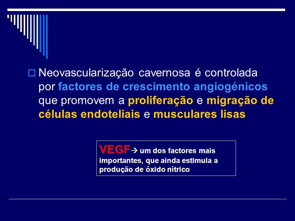 Neovascularização cavernosa é controlada por factores de crescimento angiogénicos que promovem a proliferação e migração de células endoteliais e musc