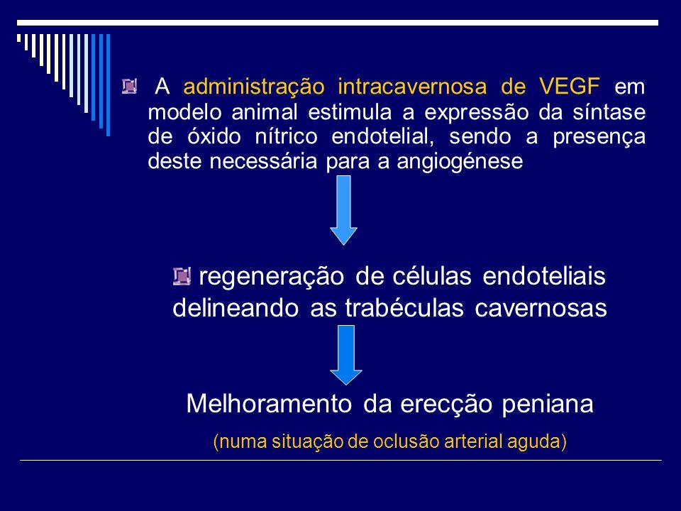 A administração intracavernosa de VEGF em modelo animal estimula a expressão da síntase de óxido nítrico endotelial, sendo a presença deste necessária