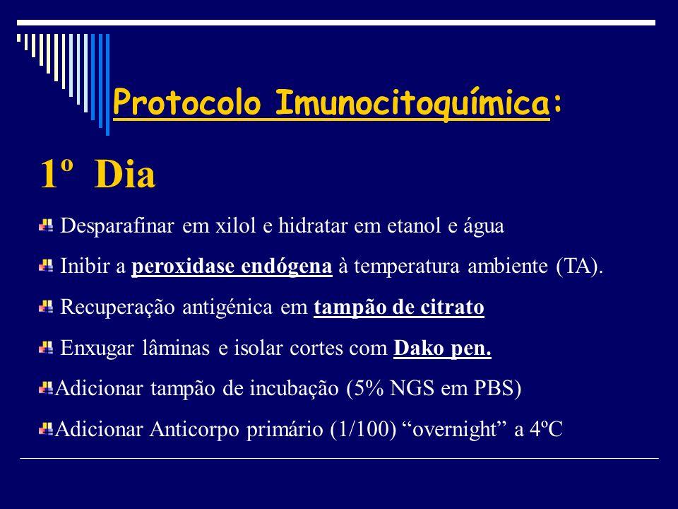 Protocolo Imunocitoquímica: 1º Dia Desparafinar em xilol e hidratar em etanol e água Inibir a peroxidase endógena à temperatura ambiente (TA). Recuper