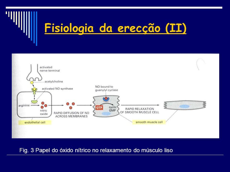 Fisiologia da erecção (II) Fig. 3 Papel do óxido nítrico no relaxamento do músculo liso