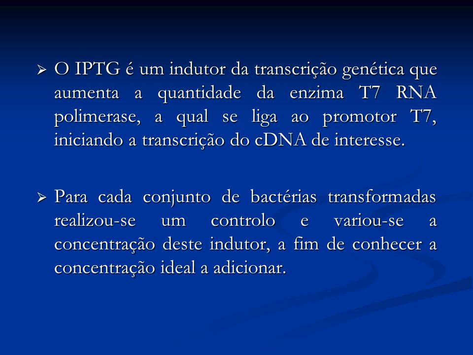 O IPTG é um indutor da transcrição genética que aumenta a quantidade da enzima T7 RNA polimerase, a qual se liga ao promotor T7, iniciando a transcriç