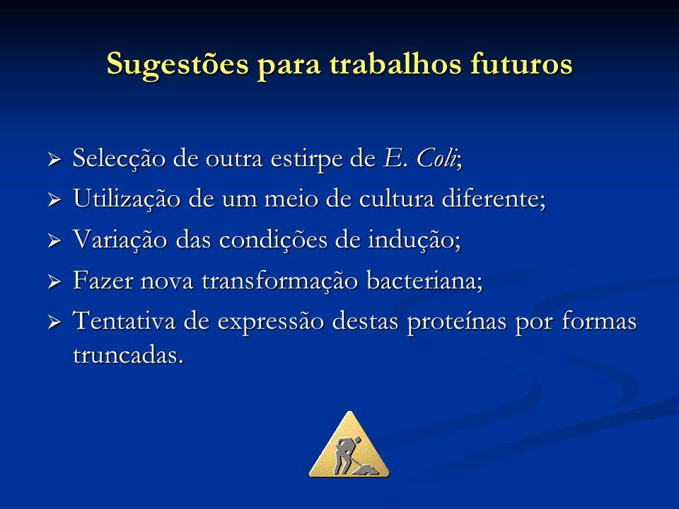 Sugestões para trabalhos futuros Selecção de outra estirpe de E. Coli; Selecção de outra estirpe de E. Coli; Utilização de um meio de cultura diferent