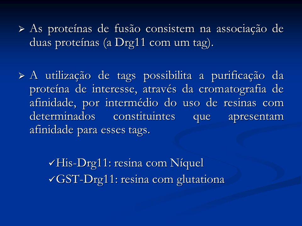 As proteínas de fusão consistem na associação de duas proteínas (a Drg11 com um tag). As proteínas de fusão consistem na associação de duas proteínas