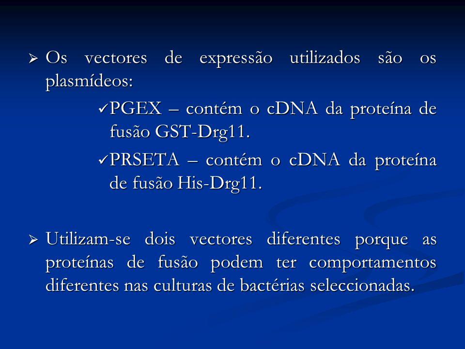 Os vectores de expressão utilizados são os plasmídeos: Os vectores de expressão utilizados são os plasmídeos: PGEX – contém o cDNA da proteína de fusã