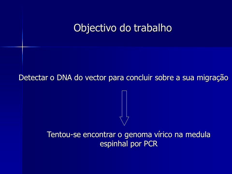 Objectivo do trabalho Detectar o DNA do vector para concluir sobre a sua migração Detectar o DNA do vector para concluir sobre a sua migração Tentou-s