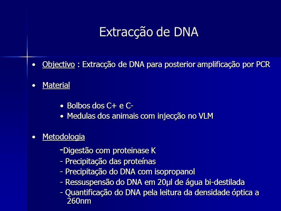 Extracção de DNA Objectivo : Extracção de DNA para posterior amplificação por PCRObjectivo : Extracção de DNA para posterior amplificação por PCR Mate