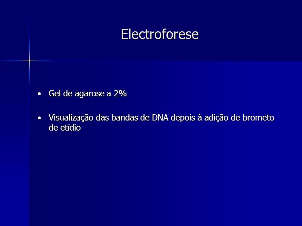 Electroforese Gel de agarose a 2%Gel de agarose a 2% Visualização das bandas de DNA depois à adição de brometo de etídioVisualização das bandas de DNA