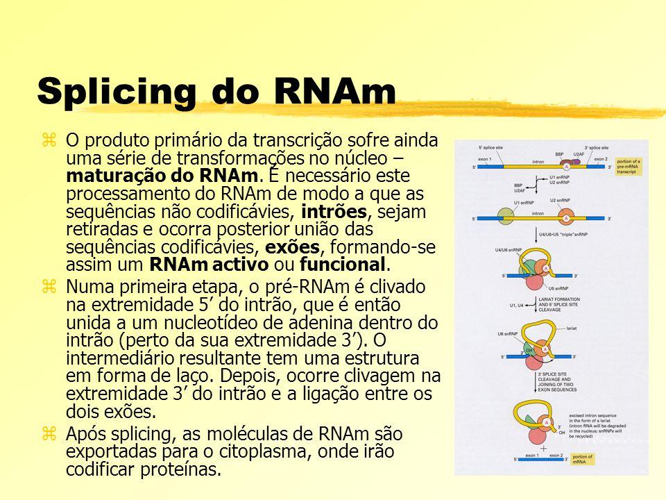 Splicing do RNAm zO produto primário da transcrição sofre ainda uma série de transformações no núcleo – maturação do RNAm. É necessário este processam