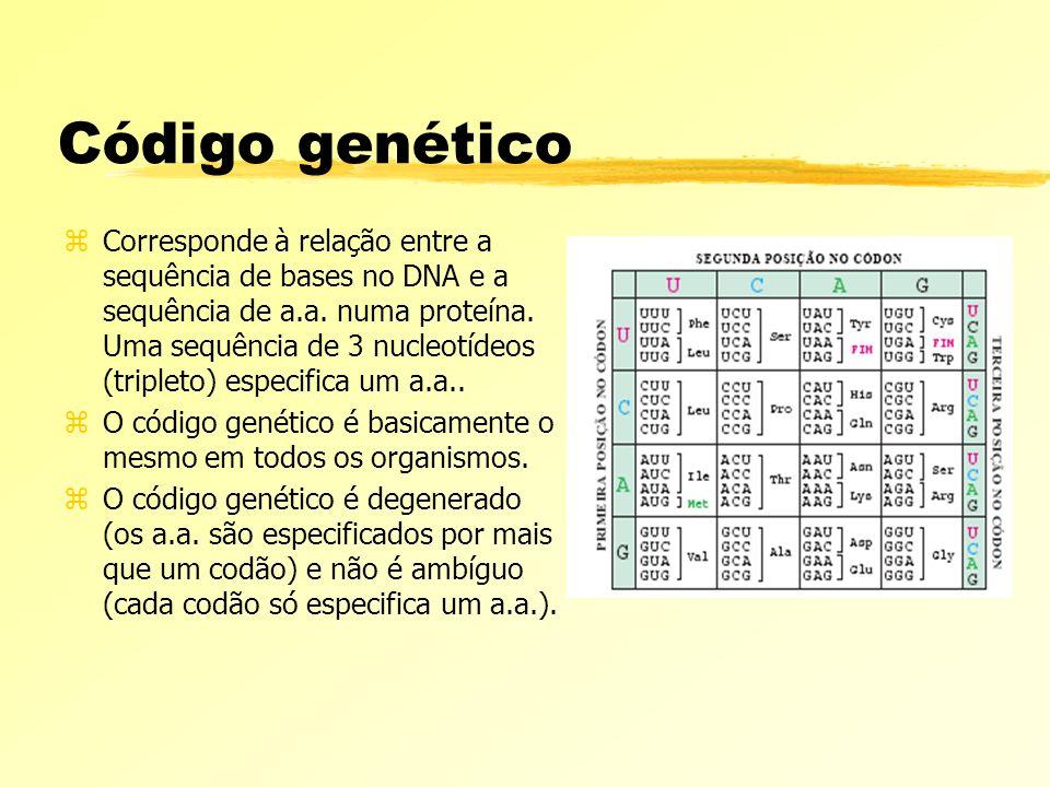 Código genético zCorresponde à relação entre a sequência de bases no DNA e a sequência de a.a. numa proteína. Uma sequência de 3 nucleotídeos (triplet