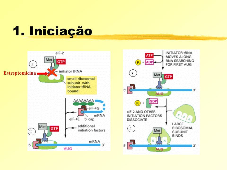 1. Iniciação 1 2 3 4 Estreptomicina