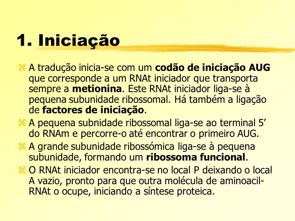 1. Iniciação zA tradução inicia-se com um codão de iniciação AUG que corresponde a um RNAt iniciador que transporta sempre a metionina. Este RNAt inic