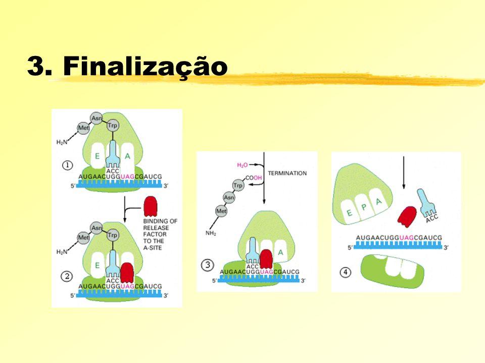 3. Finalização