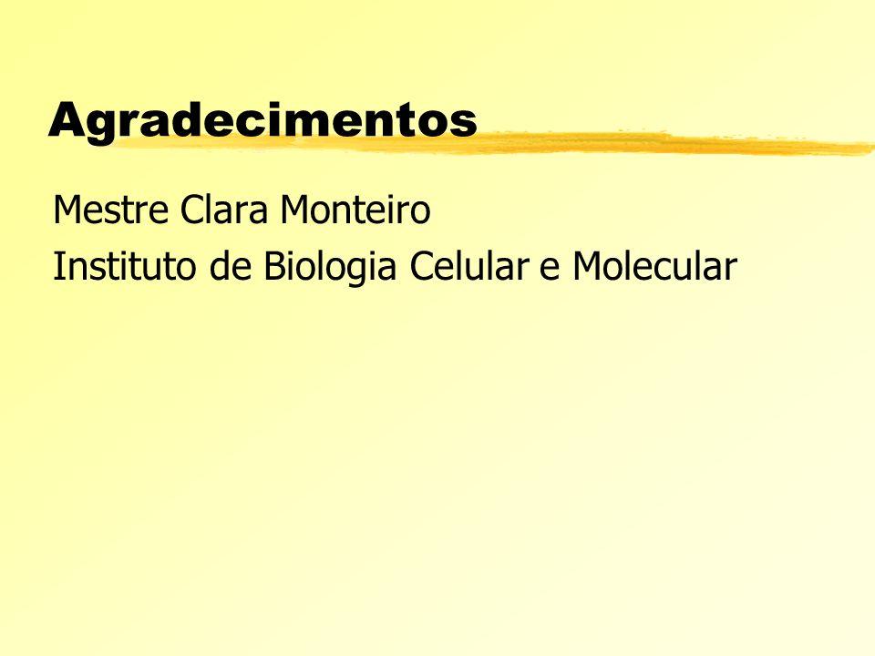 Agradecimentos Mestre Clara Monteiro Instituto de Biologia Celular e Molecular