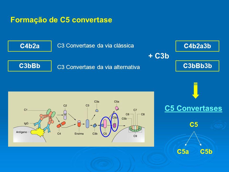 Formação de C5 convertase C4b2a C3bBb C3 Convertase da via clássica C3 Convertase da via alternativa + C3b C4b2a3b C3bBb3b C5 Convertases C5a C5b C5