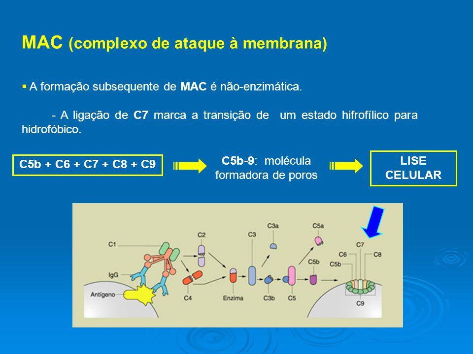 MAC (complexo de ataque à membrana) A formação subsequente de MAC é não-enzimática.