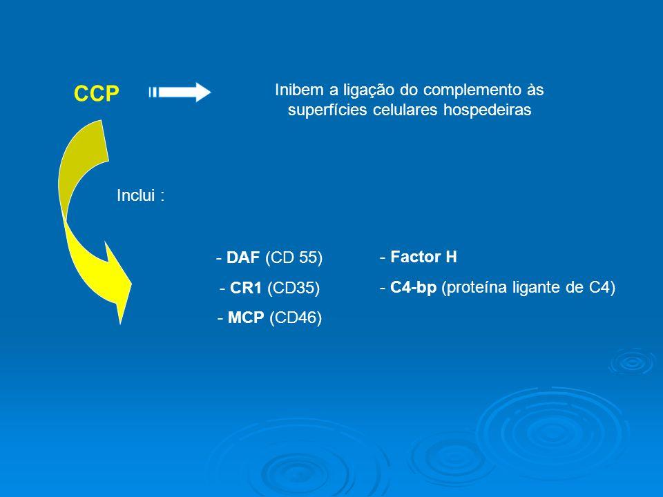 CCP Inibem a ligação do complemento às superfícies celulares hospedeiras Inclui : - DAF (CD 55) - CR1 (CD35) - MCP (CD46) - Factor H - C4-bp (proteína ligante de C4)