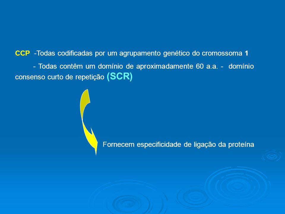 CCP -Todas codificadas por um agrupamento genético do cromossoma 1 - Todas contêm um domínio de aproximadamente 60 a.a.