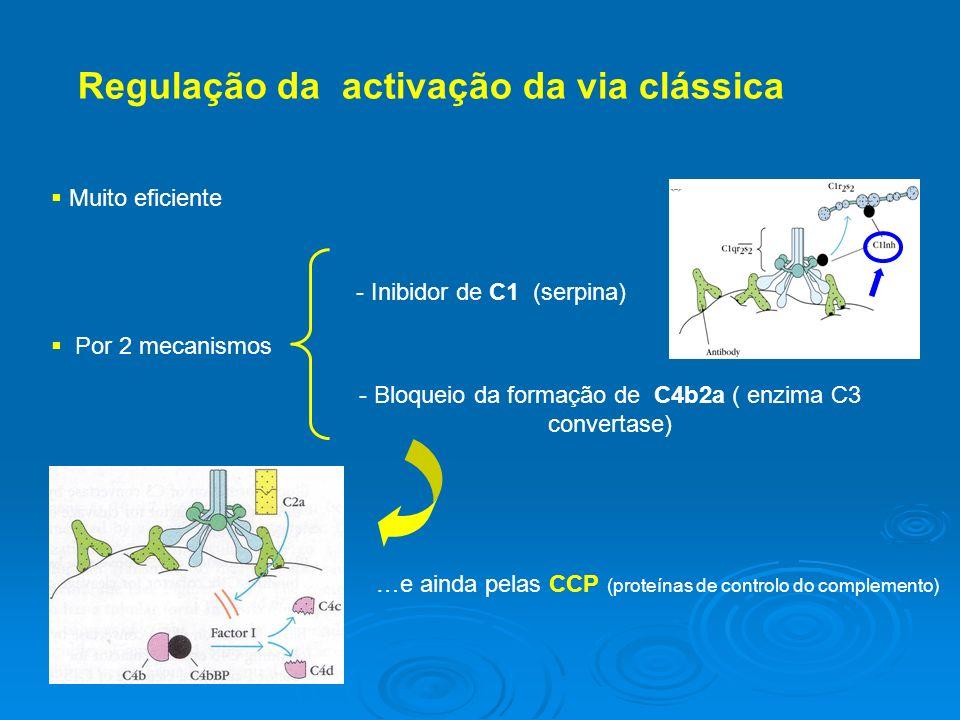 Regulação da activação da via clássica Por 2 mecanismos - Inibidor de C1 (serpina) - Bloqueio da formação de C4b2a ( enzima C3 convertase) …e ainda pelas CCP (proteínas de controlo do complemento) Muito eficiente