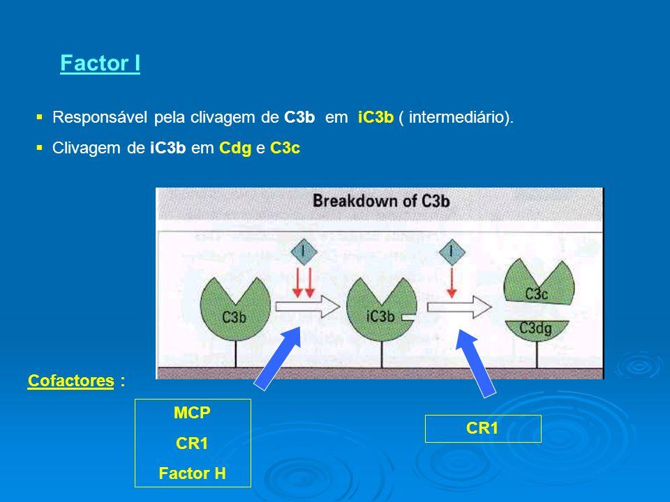 Factor I Responsável pela clivagem de C3b em iC3b ( intermediário).