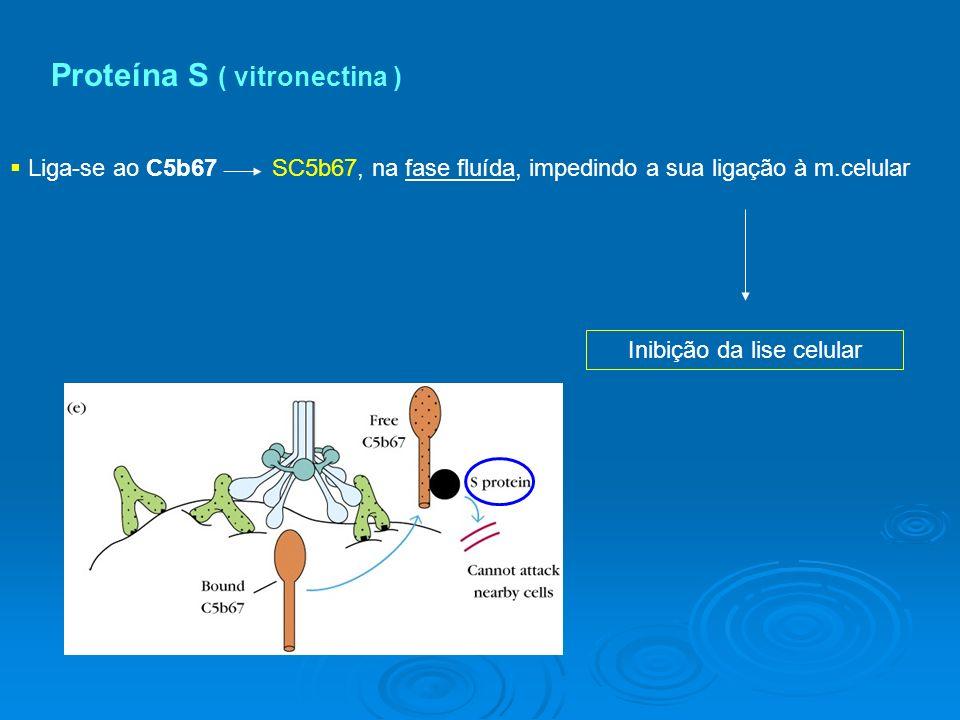 Proteína S ( vitronectina ) Liga-se ao C5b67 SC5b67, na fase fluída, impedindo a sua ligação à m.celular Inibição da lise celular