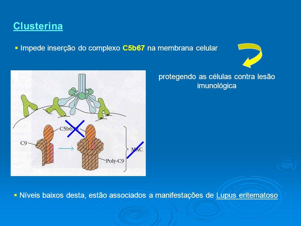 Clusterina Impede inserção do complexo C5b67 na membrana celular Níveis baixos desta, estão associados a manifestações de Lupus eritematoso protegendo as células contra lesão imunológica