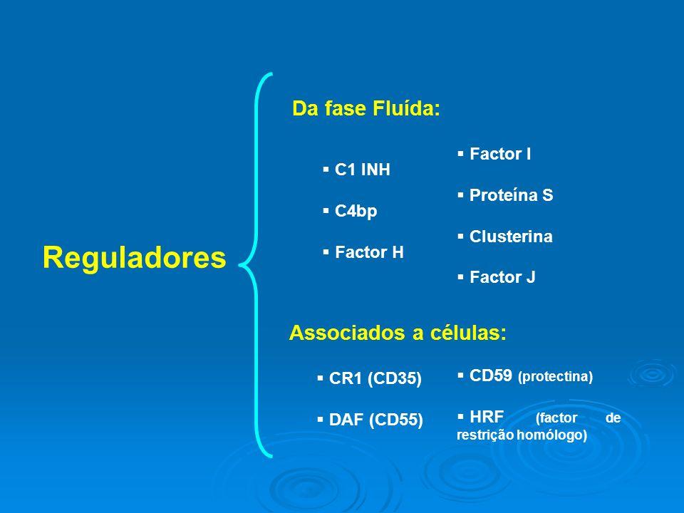 Reguladores Da fase Fluída: Associados a células: CR1 (CD35) DAF (CD55) C1 INH C4bp Factor H Factor I Proteína S Clusterina Factor J CD59 (protectina) HRF (factor de restrição homólogo)