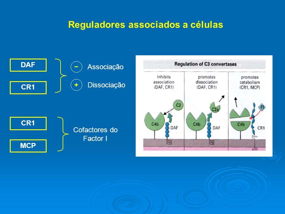 DAF CR1 Associação + Dissociação CR1 MCP Cofactores do Factor I Reguladores associados a células