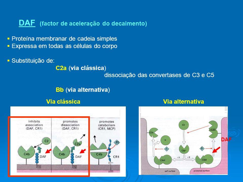 DAF (factor de aceleração do decaimento) Proteína membranar de cadeia simples Expressa em todas as células do corpo Substituição de: C2a (via clássica) dissociação das convertases de C3 e C5 Bb (via alternativa) Via clássica Via alternativa DAF (via alterna)