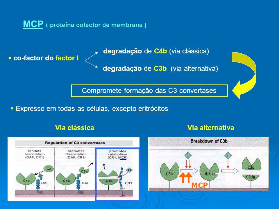 MCP ( proteína cofactor de membrana ) co-factor do factor I degradação de C4b (via clássica) degradação de C3b (via alternativa) Compromete formação das C3 convertases Expresso em todas as células, excepto eritrócitos Via clássica MCP Via alternativa