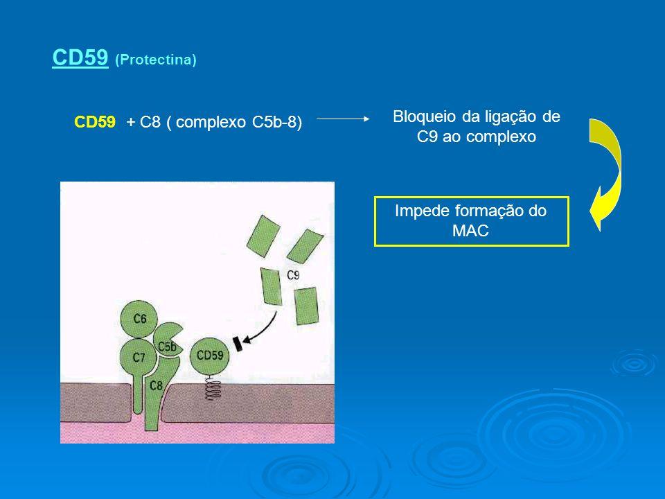 CD59 (Protectina) CD59 + C8 ( complexo C5b-8) Bloqueio da ligação de C9 ao complexo Impede formação do MAC