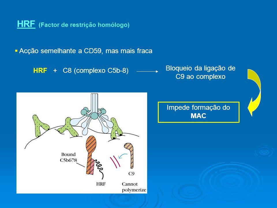HRF (Factor de restrição homólogo) Acção semelhante a CD59, mas mais fraca HRF + C8 (complexo C5b-8) Bloqueio da ligação de C9 ao complexo Impede formação do MAC