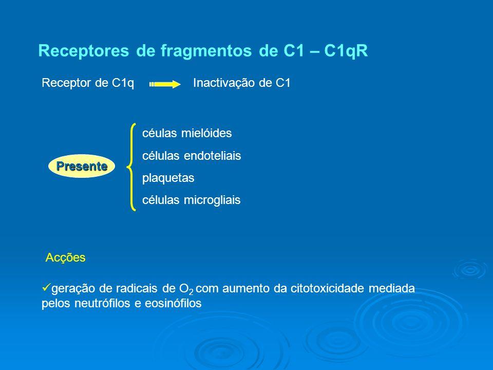 Receptores de fragmentos de C1 – C1qR Receptor de C1qInactivação de C1 Acções geração de radicais de O 2 com aumento da citotoxicidade mediada pelos neutrófilos e eosinófilos céulas mielóides células endoteliais plaquetas células microgliais Presente