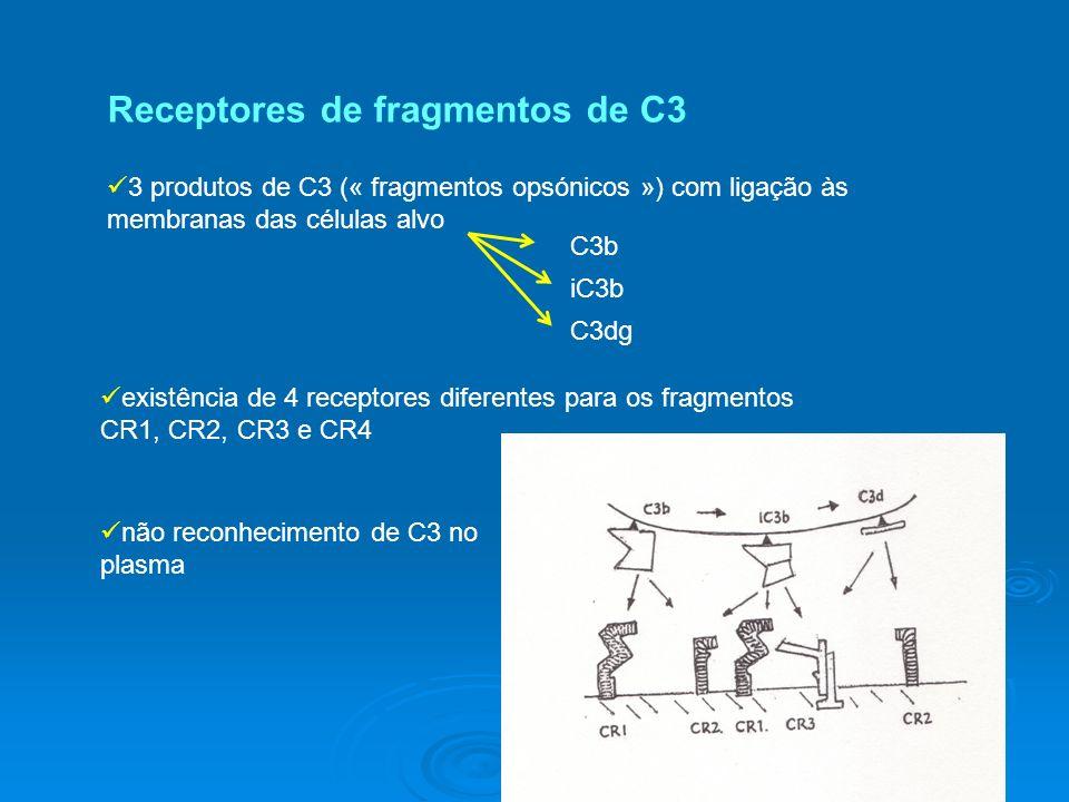 3 produtos de C3 (« fragmentos opsónicos ») com ligação às membranas das células alvo C3b iC3b C3dg existência de 4 receptores diferentes para os fragmentos CR1, CR2, CR3 e CR4 não reconhecimento de C3 no plasma Receptores de fragmentos de C3