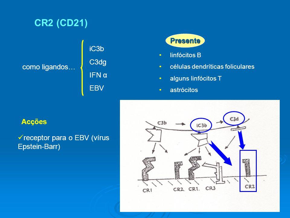 CR2 (CD21) iC3b C3dg IFN α EBV linfócitos B células dendríticas foliculares alguns linfócitos T astrócitos como ligandos… Acções receptor para o EBV (vírus Epstein-Barr) Presente