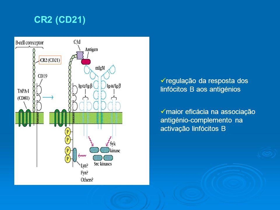 CR2 (CD21) regulação da resposta dos linfócitos B aos antigénios maior eficácia na associação antigénio-complemento na activação linfócitos B