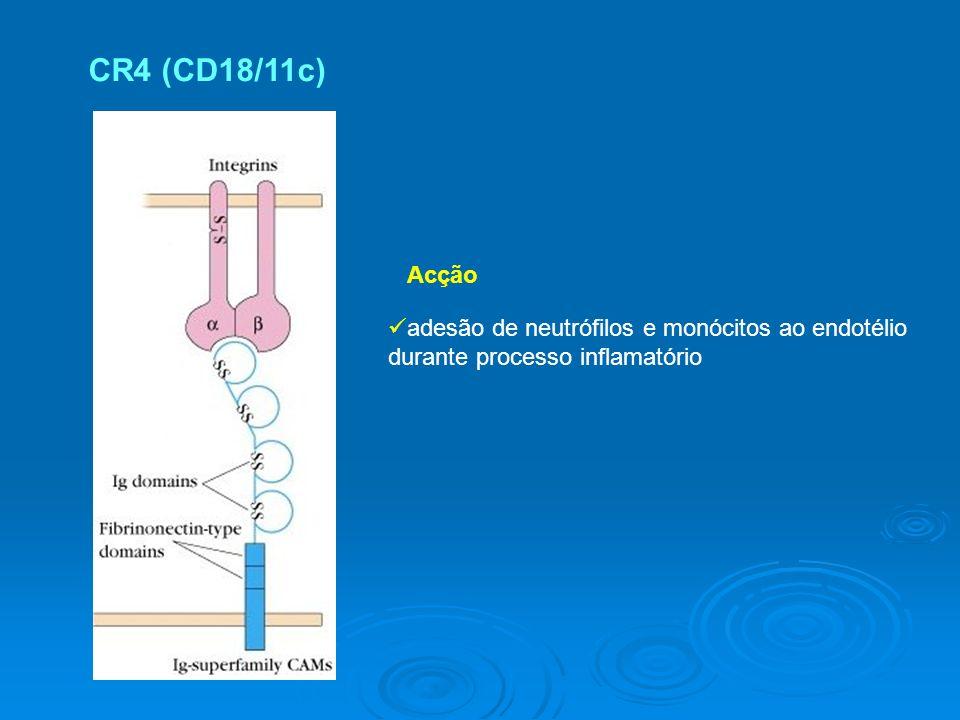 CR4 (CD18/11c) Acção adesão de neutrófilos e monócitos ao endotélio durante processo inflamatório