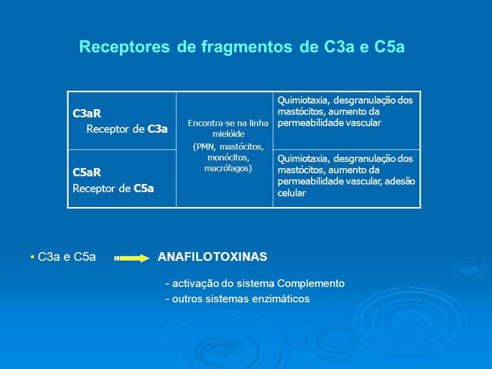 Receptores de fragmentos de C3a e C5a C3aR Receptor de C3a Quimiotaxia, desgranulação dos mastócitos, aumento da permeabilidade vascular C5aR Receptor de C5a Quimiotaxia, desgranulação dos mastócitos, aumento da permeabilidade vascular, adesão celular Encontra-se na linha mielóide (PMN, mastócitos, monócitos, macrófagos) C3a e C5aANAFILOTOXINAS - activação do sistema Complemento - outros sistemas enzimáticos