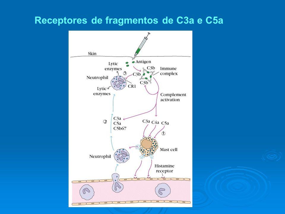 Receptores de fragmentos de C3a e C5a