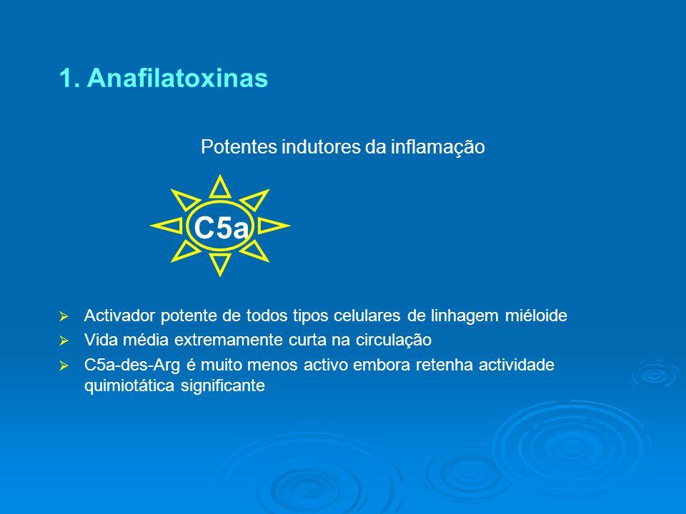 Efeitos biológicos de C5a e C5a-des-Arg