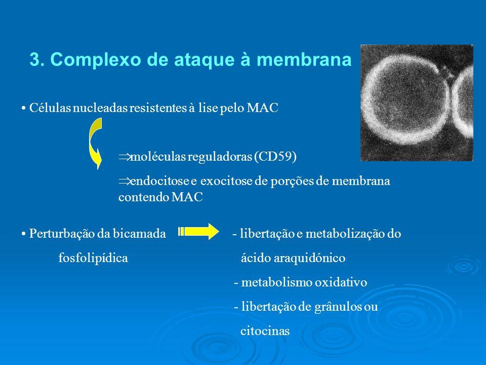 Deficiências do Complemento Componentes da via clássica e de C3 Família de receptores CR3/CR4/LFA-1 Infecções por Bactérias piogénicas Componentes do MAC Infecções por Leisseria meningitidis